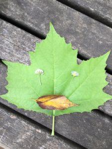 葉っぱ福笑い