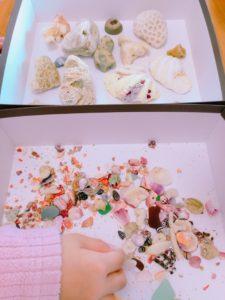沖縄で拾った貝